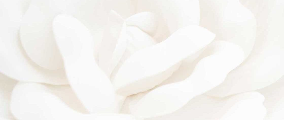 Close up of white rose petals.